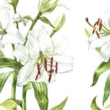 Seamless floral pattern. Watercolor white lilies, hand drawn botanical illustration of flowers. Seamless floral pattern. Watercolor white lilies, hand drawn Royalty Free Stock Photo