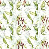 Seamless floral pattern. Watercolor white lilies, hand drawn botanical illustration of flowers. Seamless floral pattern. Watercolor white lilies, hand drawn Royalty Free Stock Photos