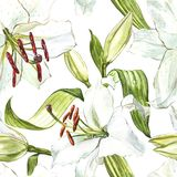 Seamless floral pattern. Watercolor white lilies, hand drawn botanical illustration of flowers. Seamless floral pattern. Watercolor white lilies, hand drawn royalty free illustration