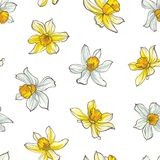 Seamless floral pattern on white background. Hand-drawn flowers - Daffodil. Image for your design projects Royalty Free Stock Photo