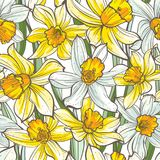 Seamless floral pattern on white background. Hand-drawn flowers - Daffodil. Image for your design projects Stock Photography