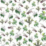 Seamless floral pattern on white background royalty free illustration