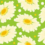 Seamless floral pattern with white daisy Stock Photography