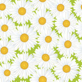 Seamless floral pattern with white flowers Royalty Free Stock Image