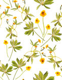Seamless floral pattern with yellow flowers. Seamless floral pattern with plants on a white background. Background image stock photos