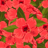 Seamless floral red hibiscus background  in realistic hand-drawn style. Royalty Free Stock Images