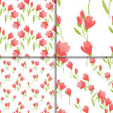 Seamless floral set with tulip flowers Royalty Free Stock Image