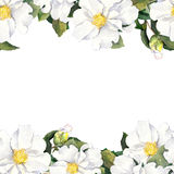 Seamless floral stripe frame with white flowers. Watercolor banner Stock Photos
