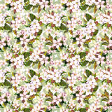 Seamless floral swatch with blooming apple flower, cherry blossom. Aquarell drawing Stock Photography