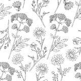 Seamless floral vector pattern, Chamomile wild field flower, Valeriana officinalis isolated on white background, hand. Drawn daisy doodle illustration for Stock Images