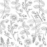 Seamless floral vector pattern, Mint leaves, peppermint buds, Chamomile wild field flower isolated on white background. Seamless floral vector pattern, Mint Stock Images