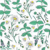 Seamless floral vector pattern, Mint leaves, peppermint buds, Chamomile wild field flower  on white background. Hand drawn daisy doodle illustration for design Stock Images