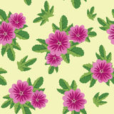 Seamless floral vector texture with malva flowers Stock Photography