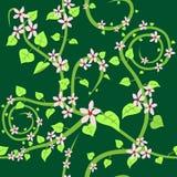 Seamless floral wallpaper Stock Photos