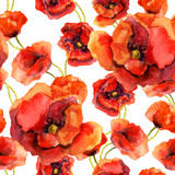 Seamless floral wallpaper with colorful poppies. Watercolor painting Stock Images