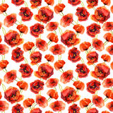 Seamless floral wallpaper with colorful poppies. Watercolor painting Stock Image