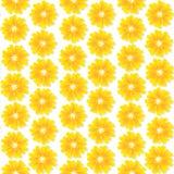 Seamless floral wallpaper Royalty Free Stock Photos