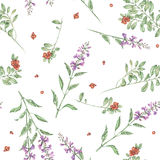 Seamless floral watercolor cowberry and salvia flowers pattern. Seamless floral pattern with cowberry and salvia flowers, hand drawn in watercolor on a white Royalty Free Stock Photos