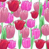 Seamless florals pattern background with red and pink cute tulip Royalty Free Stock Images