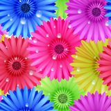 Seamless flower gerbera patter. Stock Images