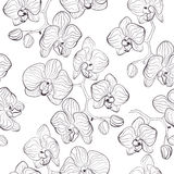 Seamless flower pattern with orchids phalaenopsis background Royalty Free Stock Images