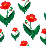 Seamless flower pattern. poppy. illustration Stock Photography