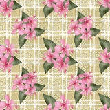 Seamless flowers hibiscus pattern on beige lace Stock Images