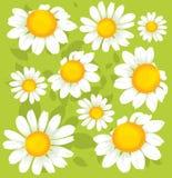 Seamless flowers pattern Royalty Free Stock Photo