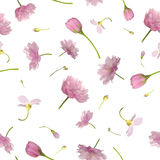 Seamless flying flowers in pink. Repeatable background of pink flowers, isolated on white Stock Photography