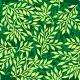 Seamless foliate ornament. Green foliate background Royalty Free Stock Photo