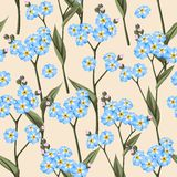 Seamless forget me not Stock Photo
