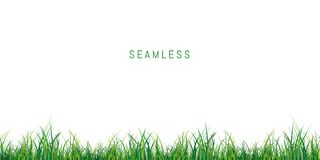 Seamless fresh green grass on white background. Fresh green grass on white background Seamless texture royalty free illustration