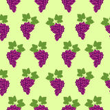 Seamless fruits vector pattern, bright color background with grapes and leaves, over light green backdrop.  Royalty Free Stock Photo
