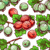 Seamless gooseberry Stock Photos