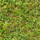 Seamless gräs Ny för mossagolv för grönt gräs bakgrund för textur för trädgård Arkivbild