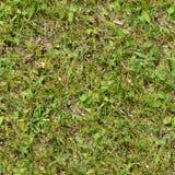 Seamless gräs Ny för mossagolv för grönt gräs bakgrund för textur för trädgård Royaltyfria Foton