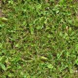 Seamless gräs Ny för mossagolv för grönt gräs bakgrund för textur för trädgård Arkivbilder