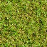 Seamless gräs Ny för mossagolv för grönt gräs bakgrund för textur för trädgård Royaltyfria Bilder