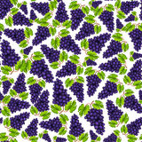 Seamless grapes fruit pattern Royalty Free Stock Photos