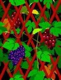 Seamless grapevine Stock Image