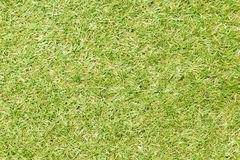Seamless grass as texture or background Royalty Free Stock Images