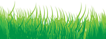 Seamless grass background green Royalty Free Stock Photos
