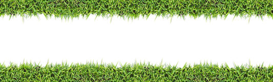 Seamless grass background  isolated on white. Royalty Free Stock Photography