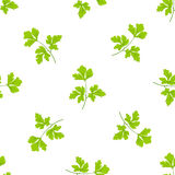Seamless grass background, parsley green leaves on the white background Royalty Free Stock Photography