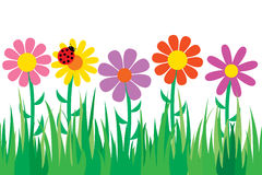 Seamless grass and flowers. Stock Photos