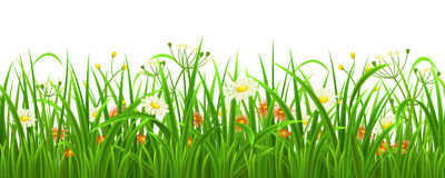 Seamless grass with flowers Royalty Free Stock Photography