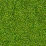 Seamless grass Stock Images