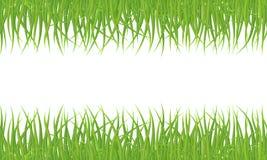 Seamless grass pattern Royalty Free Stock Photos