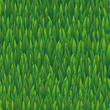 Seamless grass pattern, lawn nature illustration for wallpaper Stock Photo