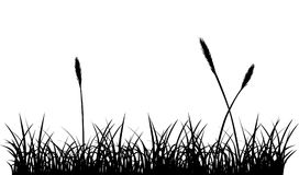 Seamless grass silhouette Royalty Free Stock Images